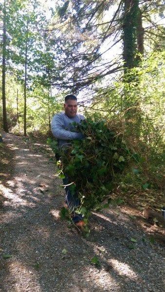 Ivy hauler